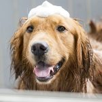 Best Antifungal Dog Shampoos