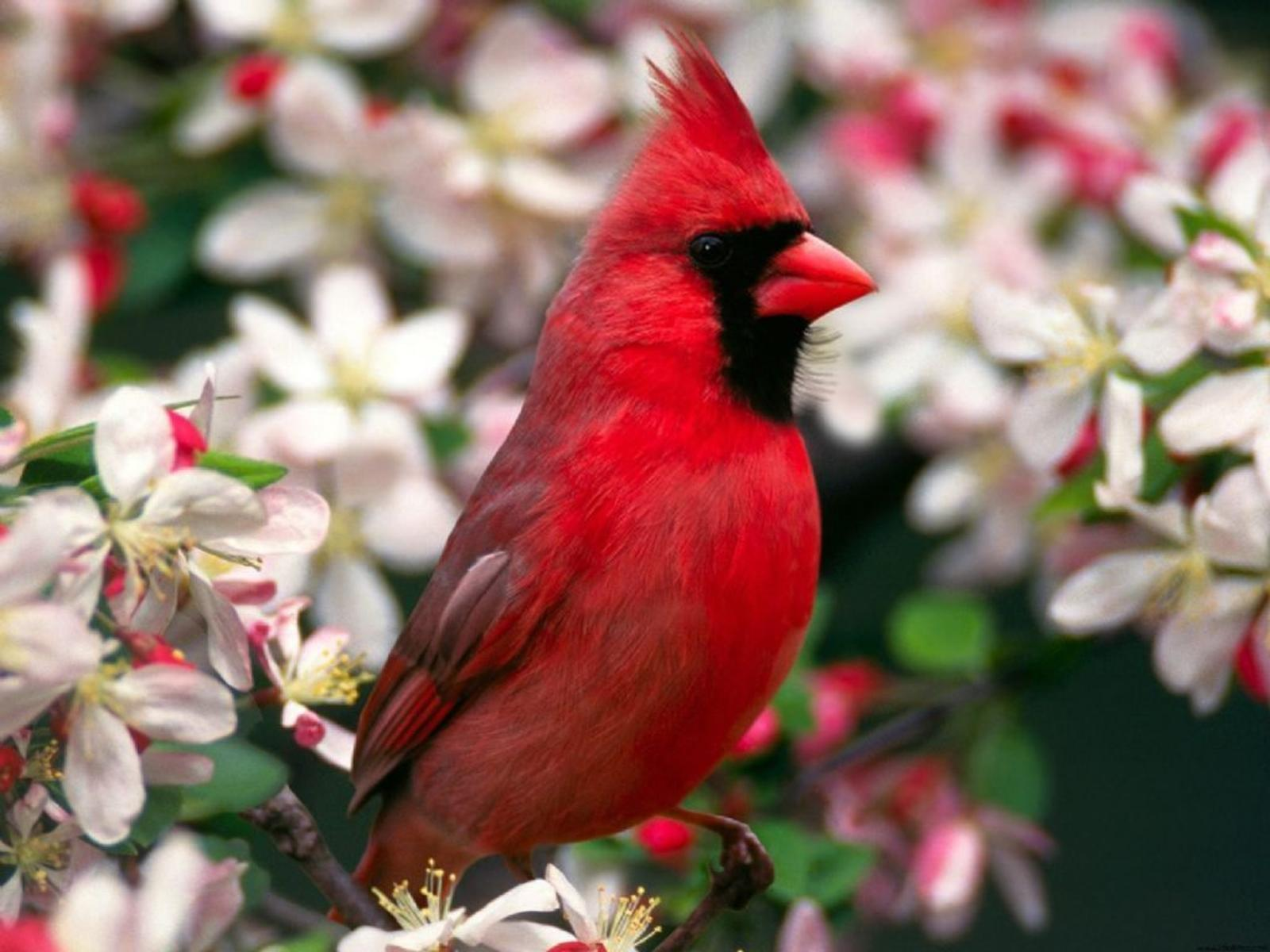 Best Cardinal Bird Feeders