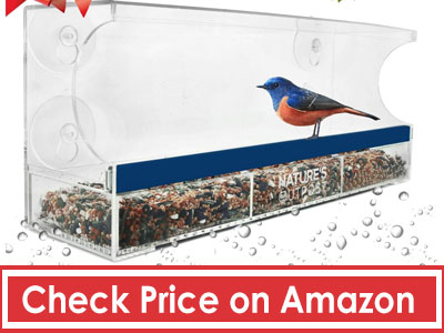 Crystal-Clear-Bird-Feeder
