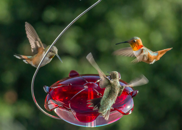 How-to-Easily-Attract-Hummingbirds