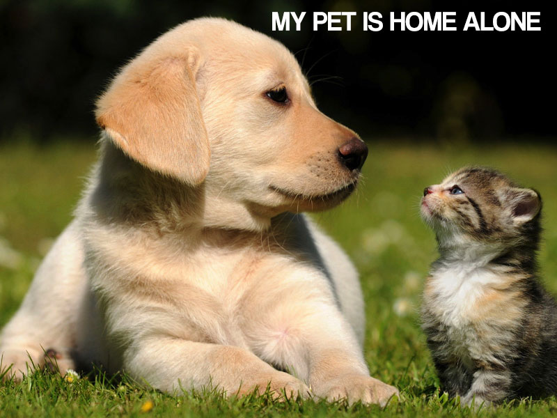 photo regarding My Dog is Home Alone Card Printable titled My Doggy Is House On your own - Crisis Card Down load